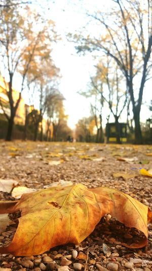 Paris Thepark Paris ❤ Leaves Showcase: November Fall Colors