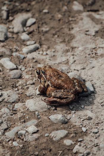 High angle view of frog on rock