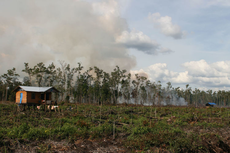 Burning rainforest to crating of a new oil pantation area INDONESIA Architecture Beauty In Nature Building Exterior Built Structure Climate Change Cloud - Sky Conservation Day Environment Environmental Damage Field Grass Land Landscape Nature No People Non-urban Scene Oil Palm Trees Oil Plant Outdoors Plant Plantation Rainforest Sky Smoke - Physical Structure Tranquility Tree