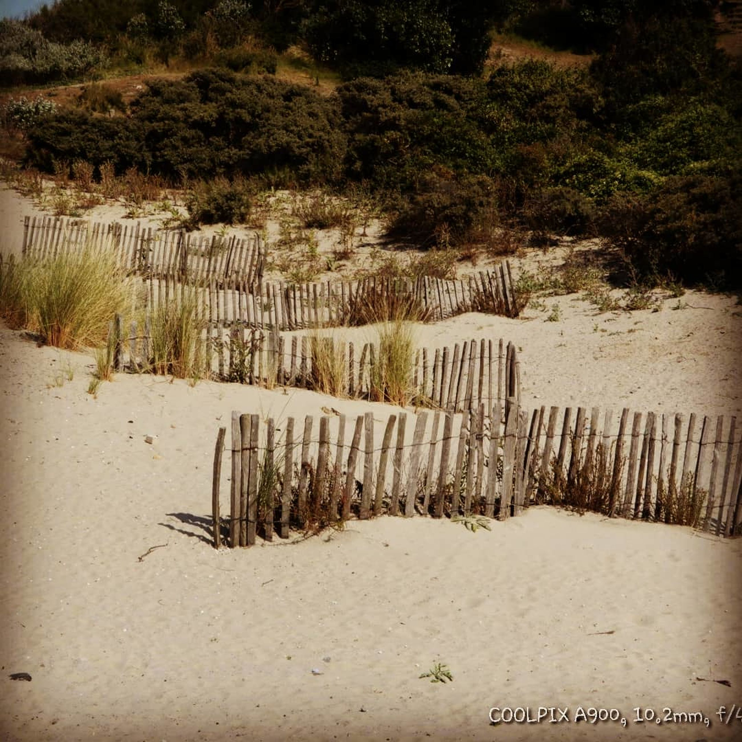 plant, tree, land, nature, tranquil scene, sand, tranquility, no people, boundary, day, fence, barrier, beach, water, beauty in nature, field, security, growth, outdoors, wood - material, wooden post