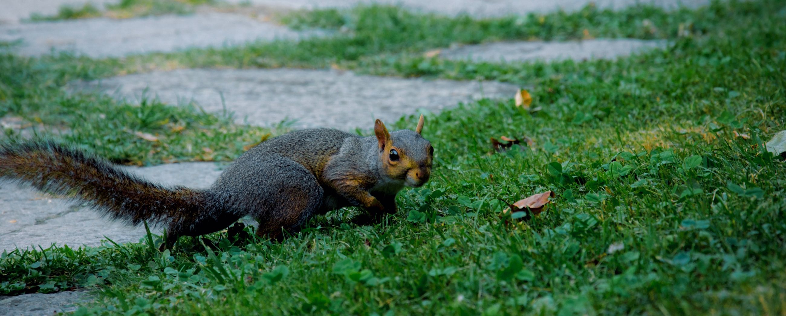 animal, animal themes, animal wildlife, mammal, animals in the wild, grass, one animal, plant, rodent, squirrel, vertebrate, no people, land, nature, green color, field, day, eating, selective focus, outdoors