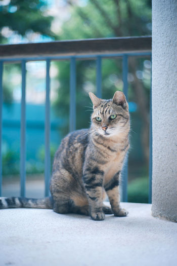 Close-up portrait of tabby cat sitting outdoors