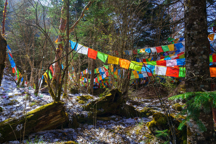 Multi colored flags hanging amidst trees in forest