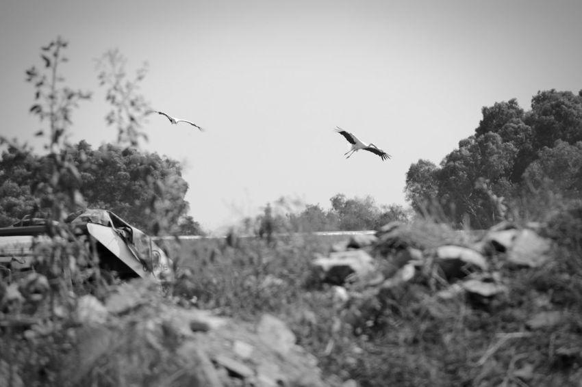 Nikon Nikon D5200 Maroc Casablanca Mohammedia Blackandwhite Birds Ooievaar Cigogne