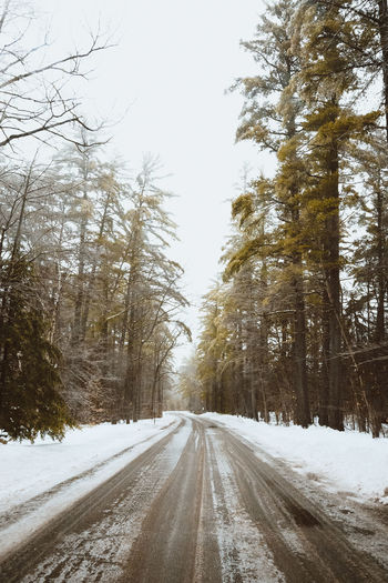 New Hampshire's Winterized Backroads Forest New Hampshire Outdoors Showcase March The Way Forward Tree Vanishing Point White Mountain National Forest Winter Winter