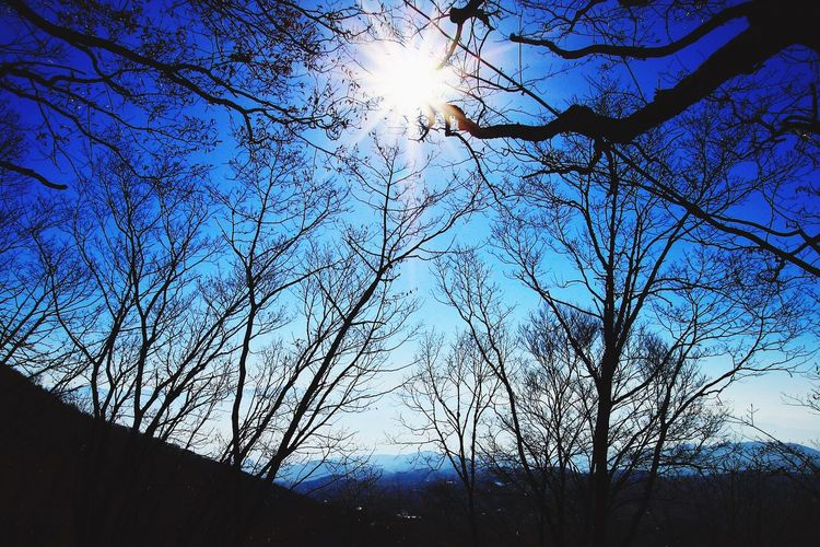 Nature Sky Tree Beauty In Nature Sun Outdoors No People Sunlight Clear Sky Blue Day Shadow Nagano, Japan