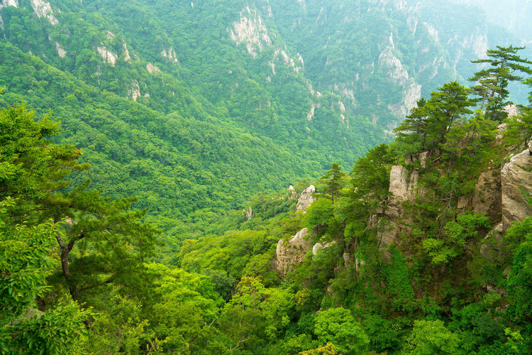 The forest of the old boundary ridge in nanyang of China. Green Natural Nature Reserve The Environmentalist – 2014 EyeEm Awards Tree Environmental Proteccccc Forest Forests Gorges Green Tree Landscape Laojieling Mountain Mountains No One Outdoors Scenic Spot The Primeval Forest The Scenic Area