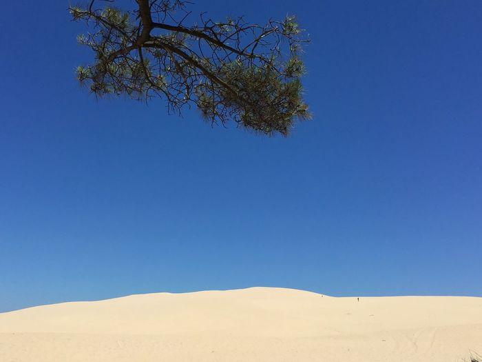 La Branche De Pin Et La Dune Dune Du Pyla Dune Sand Sand Dune Blue Sky Bluesky Gironde Bassin D Arcachon Beauty In Nature Tranquility Arid Climate Tranquil Scene Clear Sky Landscape Scenics Outdoors Minimalism Desert Minimal Colors France France 🇫🇷