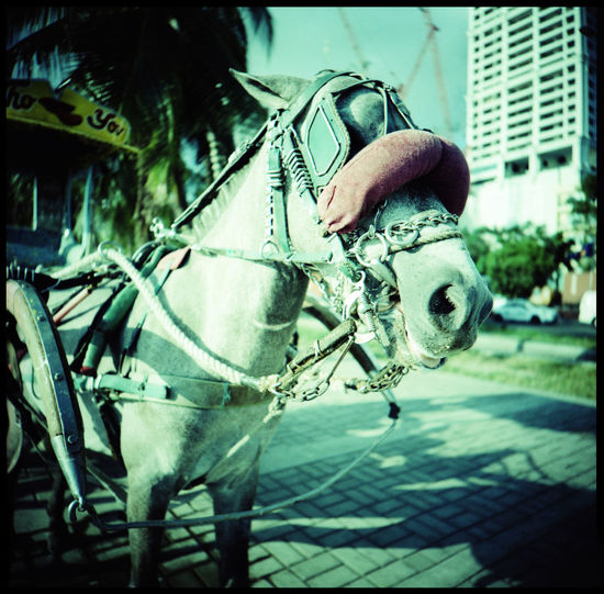 The oldest Chinatown of the world Analogue Photography ASIA Bang Chinatown Chinese Lion City Concrete Concrete Jungle Electricity Cables Film Horse Carriage Horse In Profile Jeepney Lomograpj Manila Medium Format Metropolis Philippines Pokémon Street Vendor The Street Photographer - 2017 EyeEm Awards Traffic Travel Urban Xpro