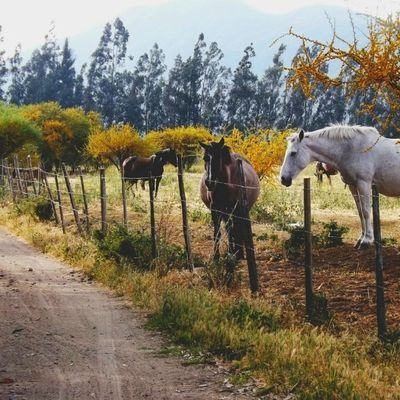 Por qué son tan lindos los caballitos. Probablemente mis favoritos después de los perros. Mamá, quiero un caballo.