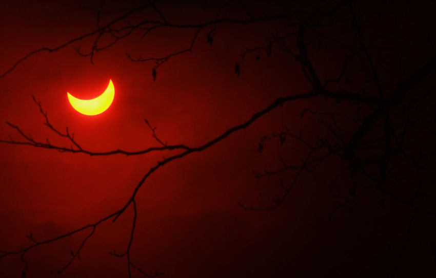 Partial solar eclipse in forest Sun Eclipse Above Astronomy Bare Tree Beauty In Nature Branch Creepy Depressive Eclipse Moon Natural Phenomenon Nature No People Outdoors Partial Solar Eclipse Red Scenics Silhouette Sky Solar Eclipse Space Tree Woods