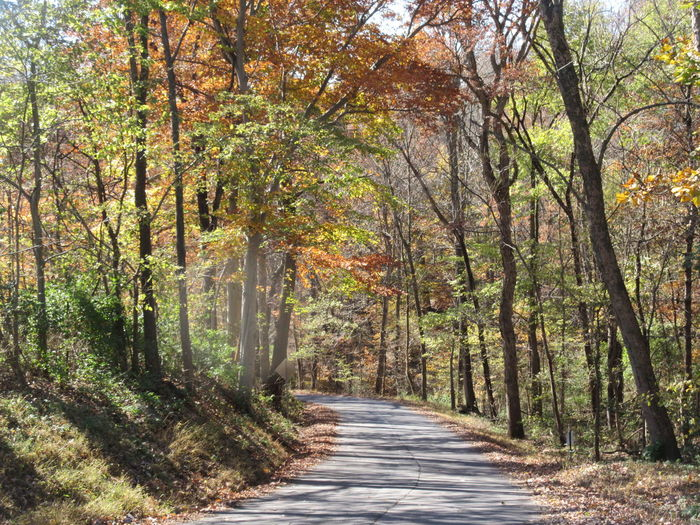 Fall Colors Cycling Around Tranquil Scene Autumn Forest Sunlight Landscape Woods Dirt Track Greenery Sunrays