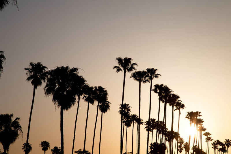Silhouette palm trees against clear sky during sunset