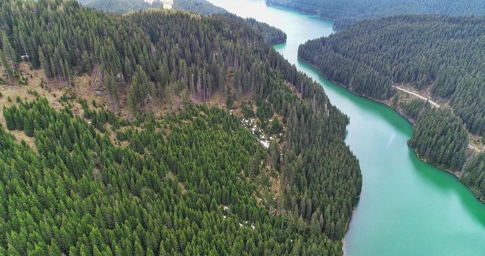 Lakeview Picea Abies EyeEm Forest Photography Nature Photography EyeEmNewHere EyeEm Selects EyeEm Nature Lover EyeEm Best Shots Water Tree Agriculture Mountain High Angle View Landscape Green Color Aerial View
