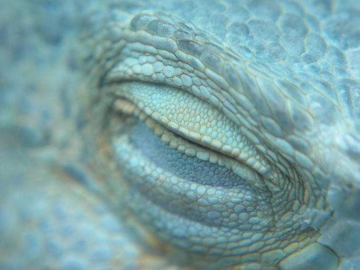 Cropped eye of reptile
