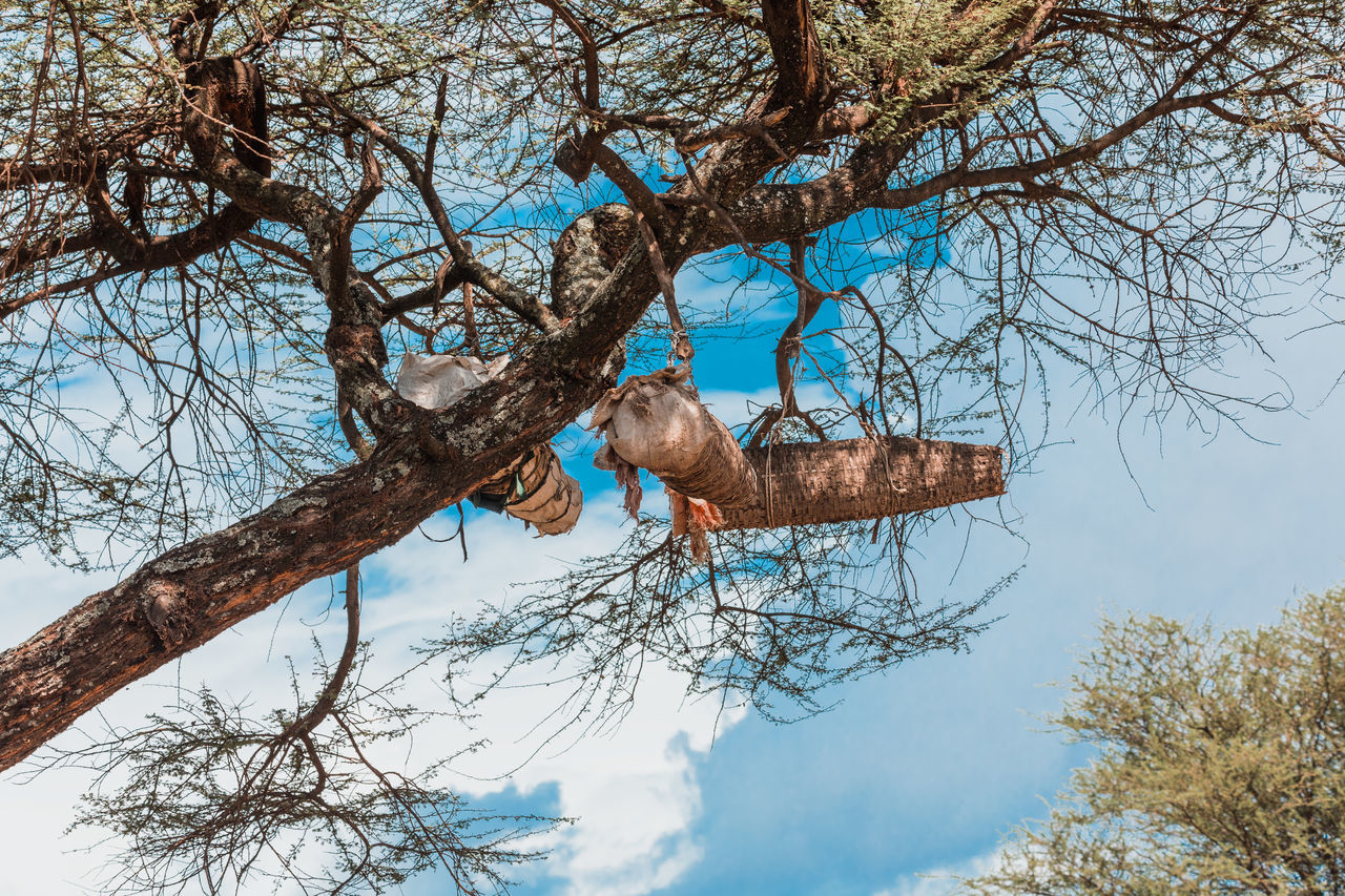 LOW ANGLE VIEW OF DEAD PLANT HANGING ON TREE