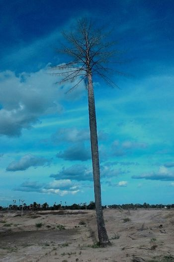 Tree Beauty In Nature Palm Tree Tree Trunk Nature Portraits Cloud - Sky Tree Up Clouds
