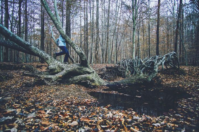 Woodland walker The Weekend On EyeEm Nature Walking Hiking Tree Autumn Outdoors Forest Tranquility Man Tree Trunk Growth Branch Walking In The Woods Bare Tree Scenics Beauty In Nature WoodLand