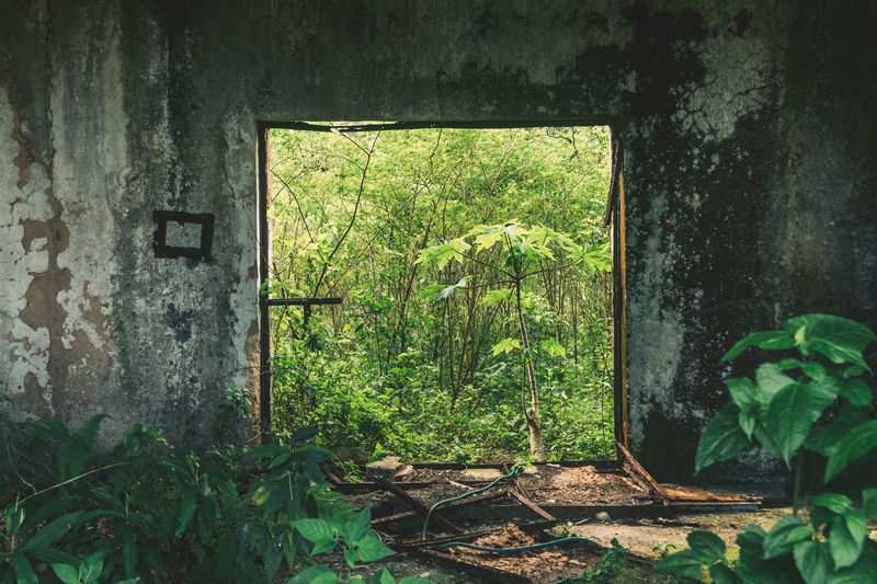 Abandoned prison at Dois Rios on Ilha Grande, Brazil. Abandoned Abandoned Places Architecture Brasil Brazil Concrete Concrete Jungle Day Forest Frame Green Color Growth Hose Indoors  Jungle Leaf Minimalism Nature No People Plant Prison Ruins Symmetrical Symmetry Window Neighborhood Map The Architect - 2017 EyeEm Awards The Photojournalist - 2017 EyeEm Awards The Great Outdoors - 2017 EyeEm Awards Live For The Story BYOPaper! EyeEm Selects EyeEmNewHere Going Remote Visual Creativity Focus On The Story The Great Outdoors - 2018 EyeEm Awards The Traveler - 2018 EyeEm Awards A New Beginning A New Perspective On Life Capture Tomorrow Springtime Decadence