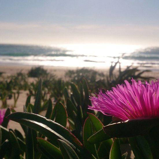 Photo Landscape Flor Rosa Pink Elpalmar Like Landscape_photography Landscape_Collection Landscape #Nature #photography Perfect Beautiful