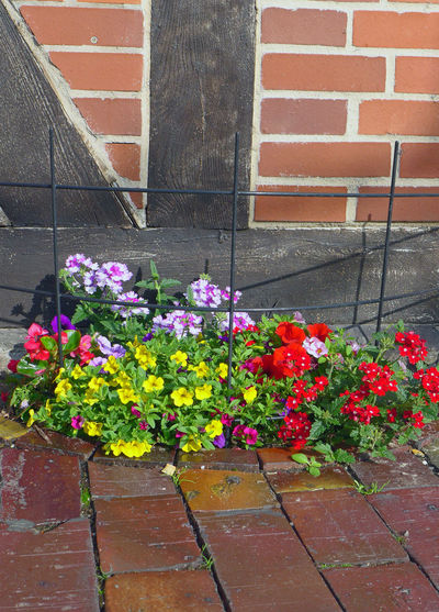 Architecture Beauty In Nature Blooming Blossom Brick Wall Built Structure Flower Fragility Freshness Growing Growth In Bloom Nature Nienburg No People Petal Pink Color Plant Walking Around