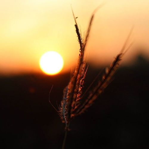 Plant growing on field at sunset