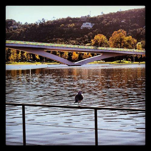 #coimbra #autumn #igers #igersportugal #portugaligers #iphone5 #iphonesia #iphoneonly #iphonephotography #instagood #instagram #instalove #instamood #instadaily #iphoneonly #pictureoftheday #photography #photooftheday #mondego #riomondego #pontepedonal #c Instadaily Pictureoftheday Instalove Autumn Portugaligers Igersportugal Canon Mondego Photography Iphonephotography Iphoneonly Riomondego Photooftheday Eos650 Iphonesia Pontepedonal Instagram Parqueverdemondego IPhone5 Parqueverde Coimbra Instamood Igers Instagood