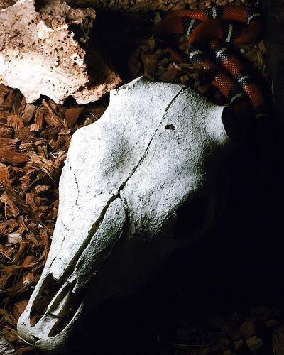 High angle view of horse