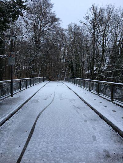 Snow auf der Schinderbrücke, Schnee, Brücke, Park, Wald, Snow On The Bridge Snow On The Ground Bridge Snow Winter Bare Tree Cold Temperature Nature Tree The Way Forward