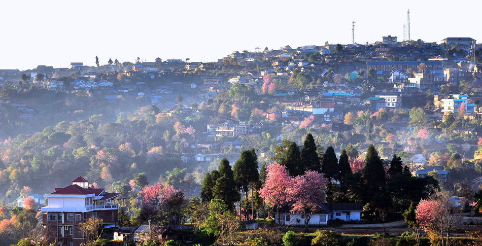 Cherry Blossom Ukhrul Hills Northeast India Cherry Blossoms Early Morning Scene MANIPUR, INDIA Small Beautiful Town Ukhrul Beauty In Nature Calm Hills Colourful Town Day Houses On Hillside Landscape No People Pink Cherry Blossoms First Eyeem Photo