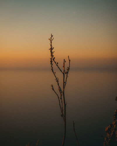 Silhouette plant against sea during sunset