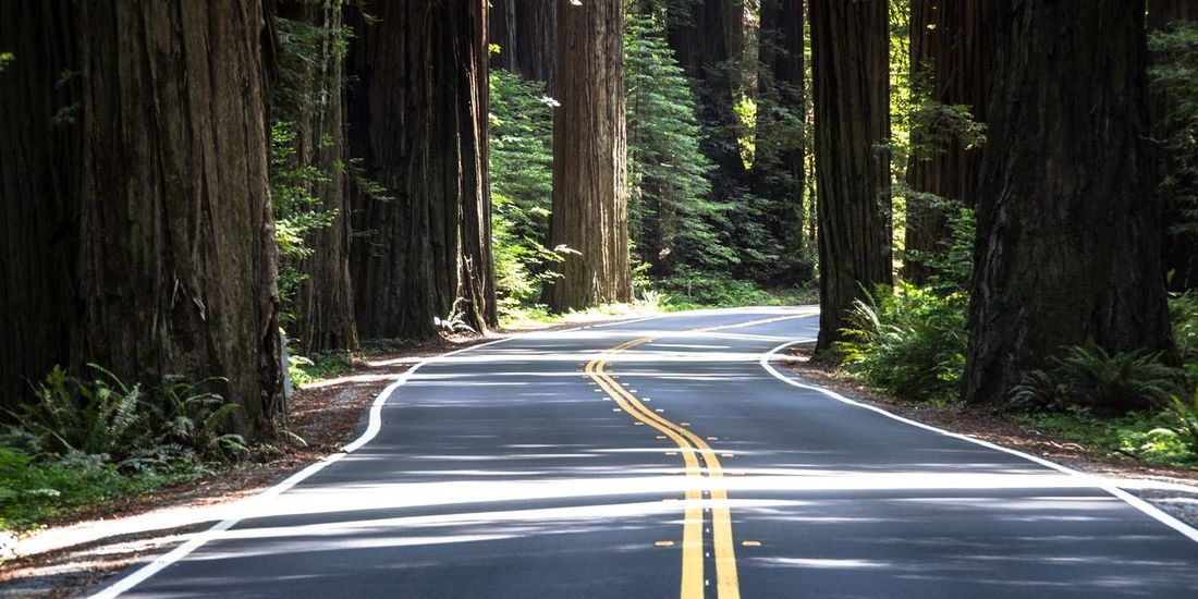 Between the Trees Hugging A Tree Nature Forest Vanishing Point RePicture Travel Street Winding Road Curve Trees Redwoods Big Trees USA USAtrip California Redwood Highway Scenics Drive Drive Through The Great Outdoors With Adobe California Dreamin