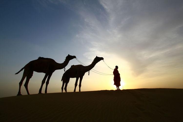 Land Sunset Sand Lifestyles Climate Sky Dessert