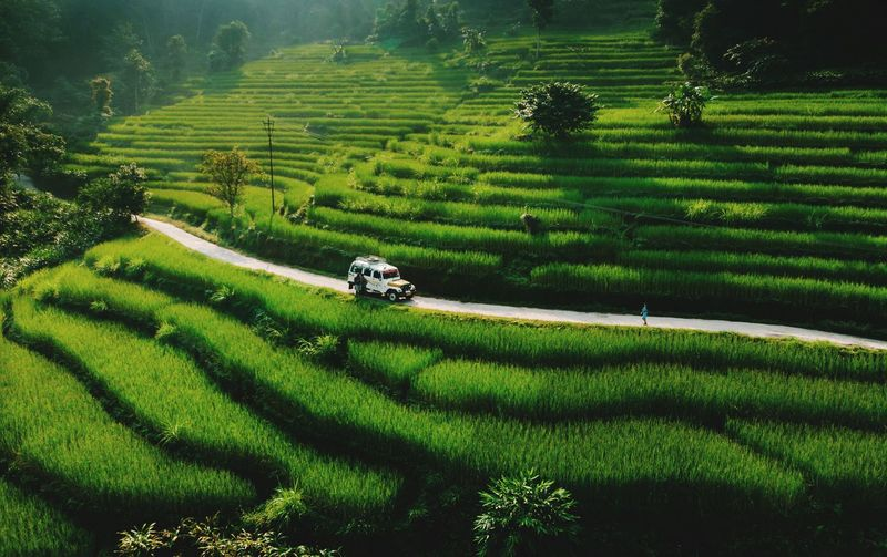 Paddy Field Growth Field Plant Agriculture Green Color Farm Scenics - Nature Rural Scene Land Landscape Crop  Environment Nature Beauty In Nature Tranquility EyeEmNewHere