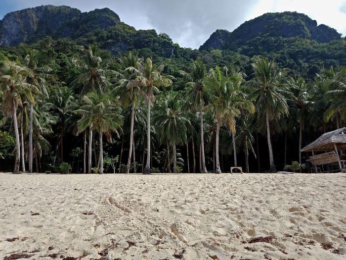 Island and