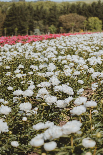 Close-up of snow on field during winter