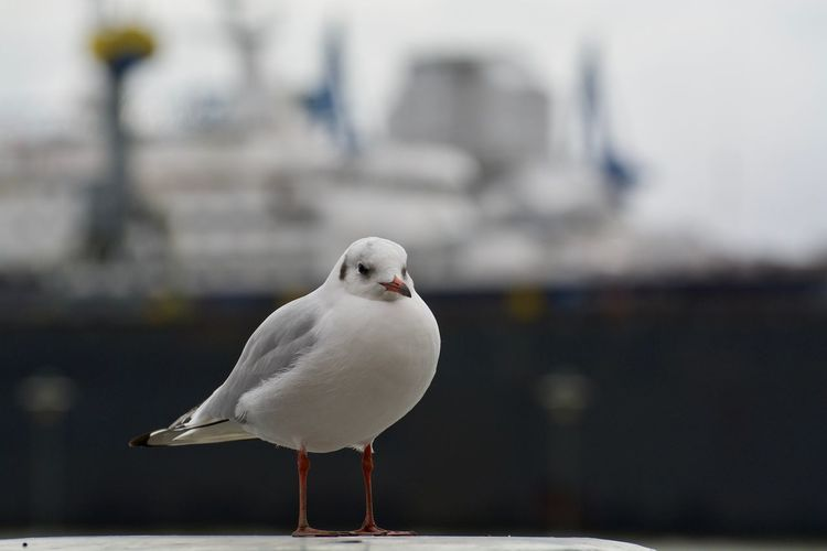 Close-up of seagull perching on railing