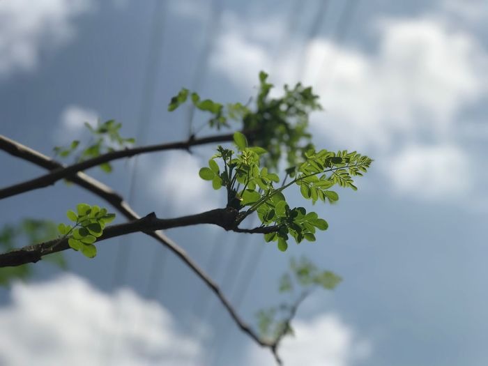 Look at me Plant Growth Plant Part Nature Low Angle View Freshness