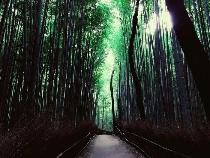 #ken3tv_kyoto #travelalone #rambling #iPhone7 #kyoto #京都 #travelian #トラべリアン #旅 #travel #人生 #Life #本 #音楽 #食 #food