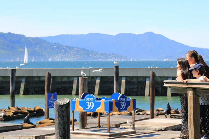 Family Time Leisure Activity Lifestyles Mountain Mountain Range Nature Outdoors Pier39 San Francisco Scenics Sea Sea Lions Tourism Tranquil Scene Tranquility Travel Destinations Vacations Water