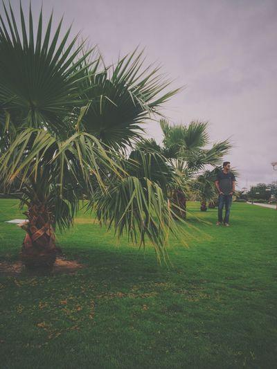 Palm trees on grassy field