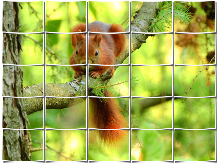 Animal Themes Animal Mammal One Animal Animal Wildlife Vertebrate No People Day Animals In Captivity Animals In The Wild Nature Focus On Foreground Outdoors Cage Fence Close-up Auto Post Production Filter Boundary Barrier Green Color Squirrel Big Picture