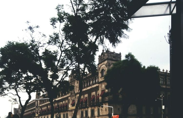 CDMX Architecture Tree Built Structure History Politics And Government Building Exterior Sky City Day No People Low Angle View Mexico City Zocalocdmx Zócalo Mexicanoscreativos Mexicoalternativo Cool Pic Outdoors