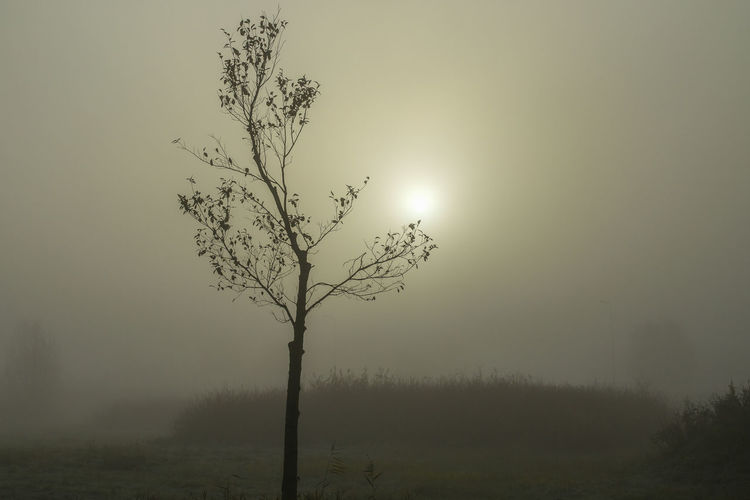 Silhouette tree on field against sky during foggy weather