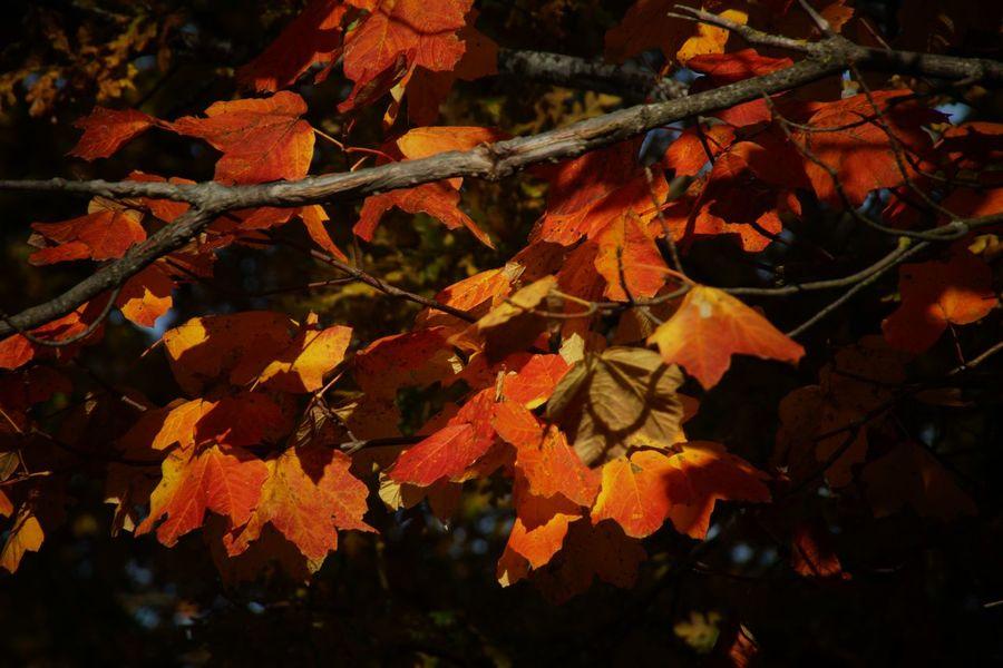 Autumn Collection Most Popular Eye Em Around The World EyeEm Gallery
