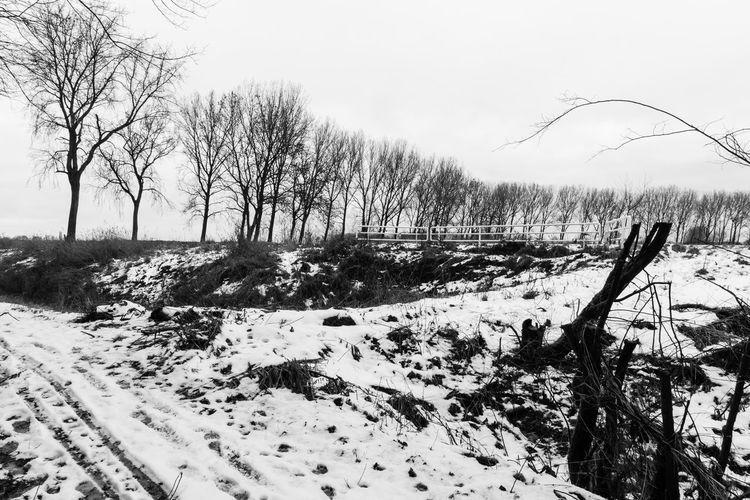 Melting snow at Knokkertweg, Nieuwvliet Snow Winter Tree Tranquil Scene Scenics - Nature Field Melting Snow Sony A77ii Black And White Zeeuws Vlaanderen Zeeland  The Netherlands