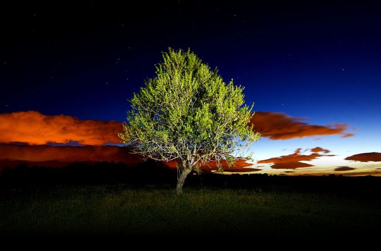 day to night HUAWEI Photo Award: After Dark Tree Star - Space Tree Area Rural Scene Moon Tree Trunk Ethereal Blue Field Innovation