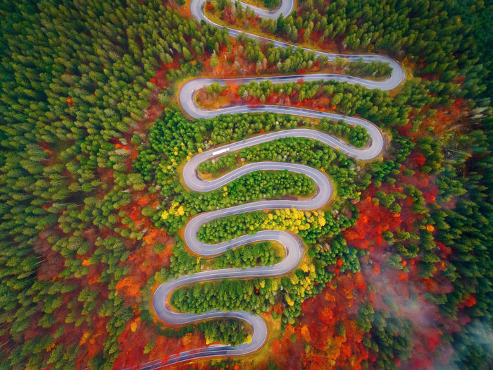 High angle view of multi colored plants on road