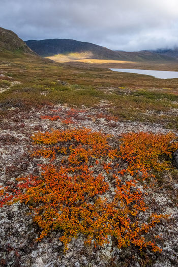 Greenland Tundra Arctic Arctic Circle Arctic Circle Trail Autumn Beauty In Nature Cloud - Sky Day Landscape Mountain Mountain Range Nature No People Outdoors Scenics Sky Tranquil Scene Tranquility Water