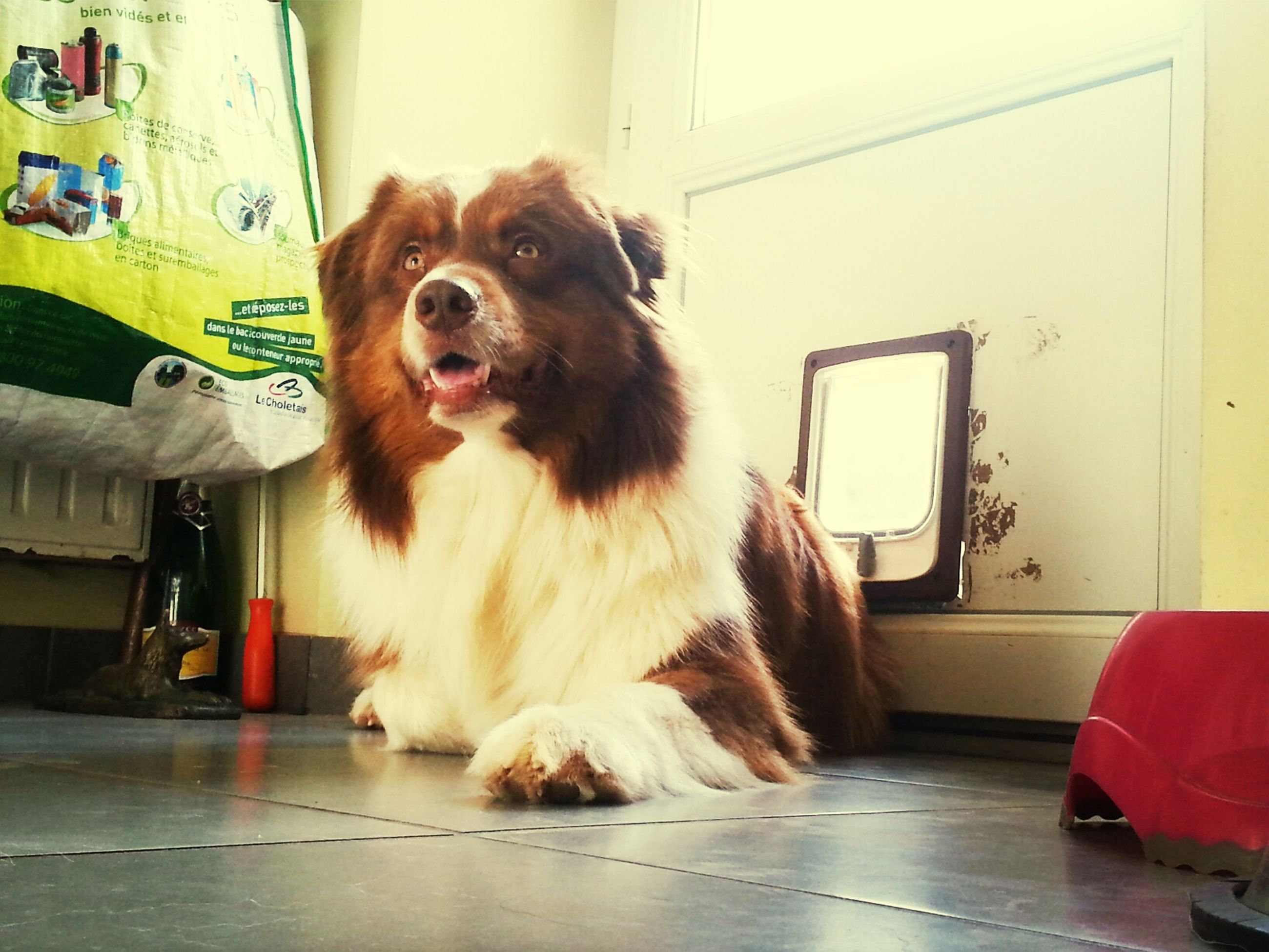 domestic animals, pets, animal themes, one animal, mammal, dog, indoors, sitting, portrait, animal hair, full length, relaxation, home interior, looking at camera, home, zoology, front view, no people, door